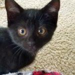 Sprinkles' Kitten: Ashley