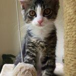 Luxury Kittens: Satin