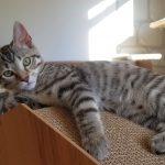 Lizzie's Kitten: Surrey