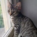 Lizzie's Kitten: Sydney