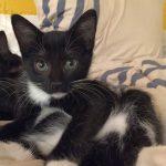 DC Metro Kittens: Tenley