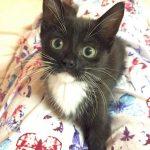 DC Metro Kittens: Vannessa