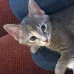 Agents of Shield Kittens: Yoyo