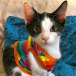 Zoomer Kittens: Buddha