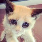 Halifax County Kittens: Bodie – ADOPTION PENDING