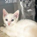 Halifax County Trio: Scottie