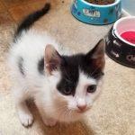 Superstar Kittens: Catsy Cline