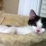 Superstar Kittens: Catt Damon