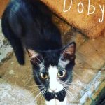 Halifax County Kittens: Doby