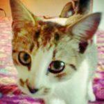 Halifax County Kittens: Mustachio