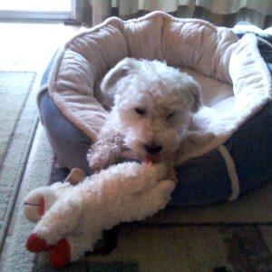 Petsmart Leesburg Dog Adoption