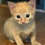 WWW Kittens: Wilbur