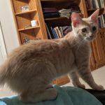 WWW Kittens: Wilma