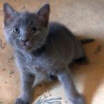 WWW Kittens: Wilson