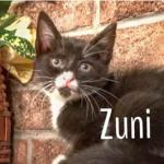 Halifax County Kittens: Zuni