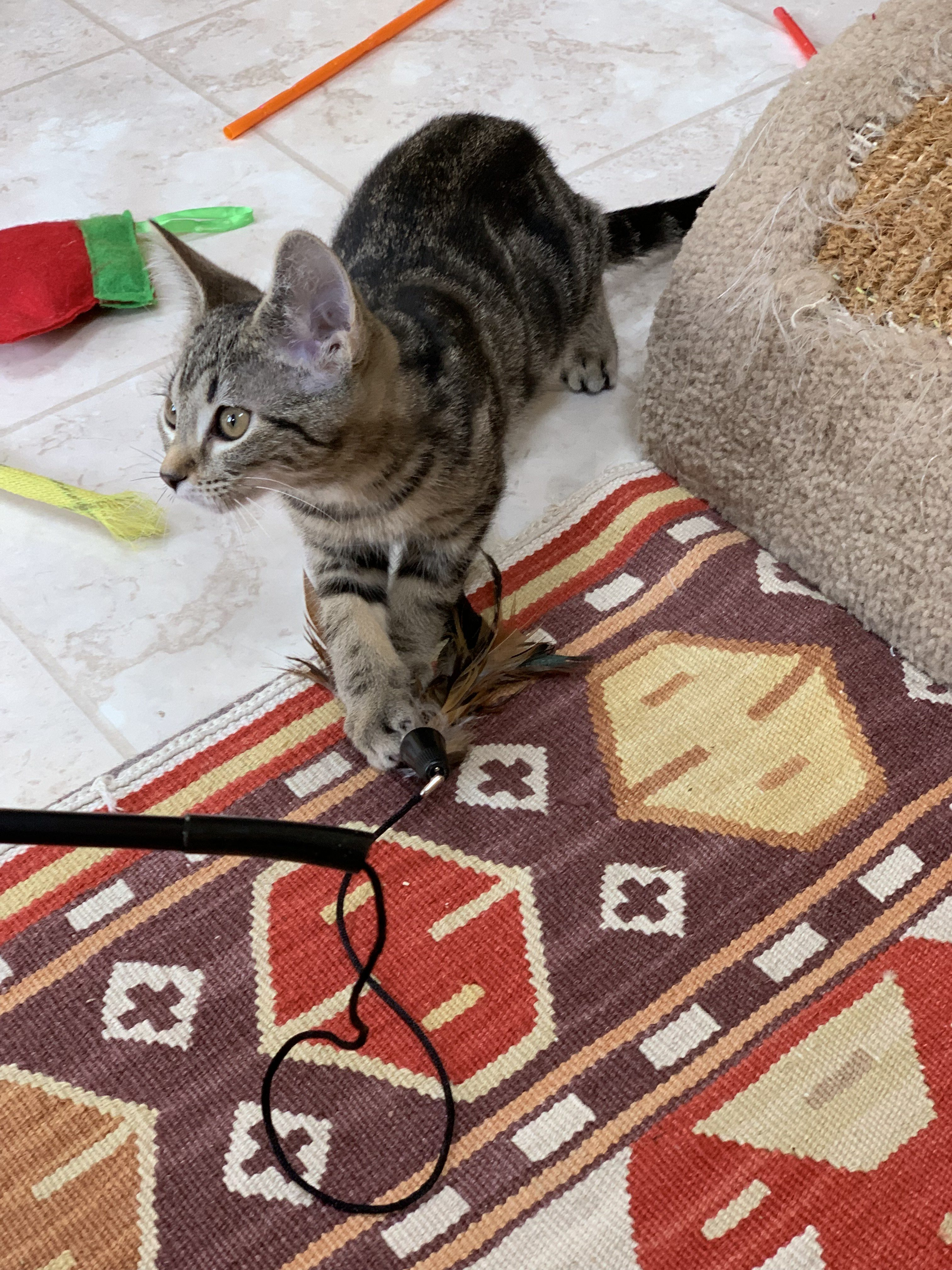 Cat Gallery Image