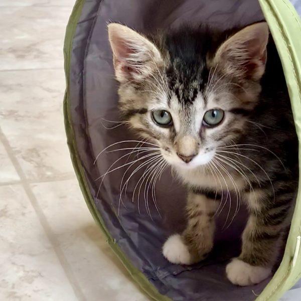 Lost Dog & Cat Rescue Foundation | Arlington, VA