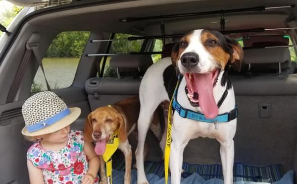 Dog Gallery Image