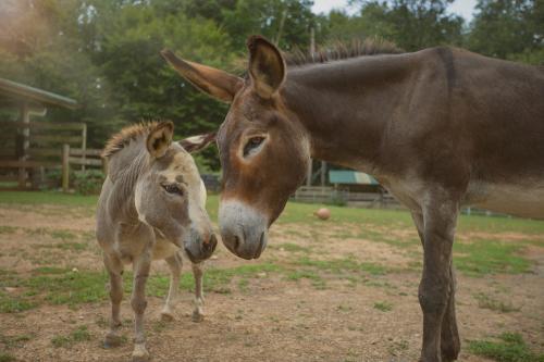 donkey best